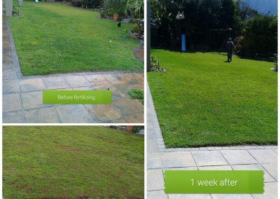 Grass Restoration